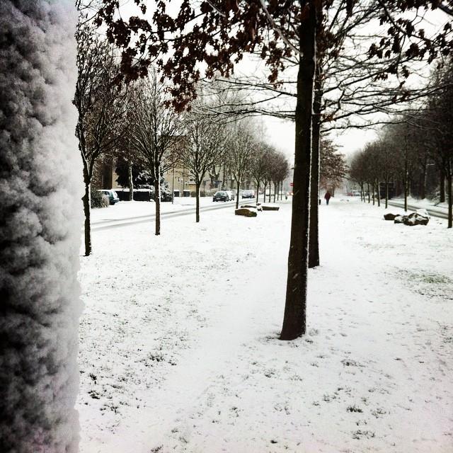 Schnee am Baum #ruhrpott #ruhrgebiet #schnee #bochum #baum #nrw #revier