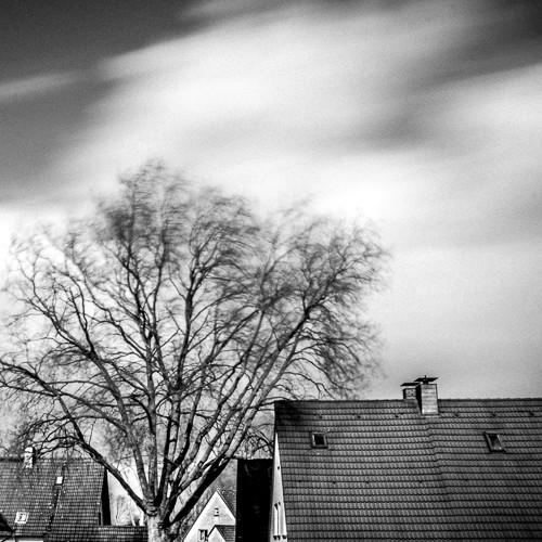 Der Baum vom Stadtteil #baum #ruhrpott #revier #instagram #ig_nrw