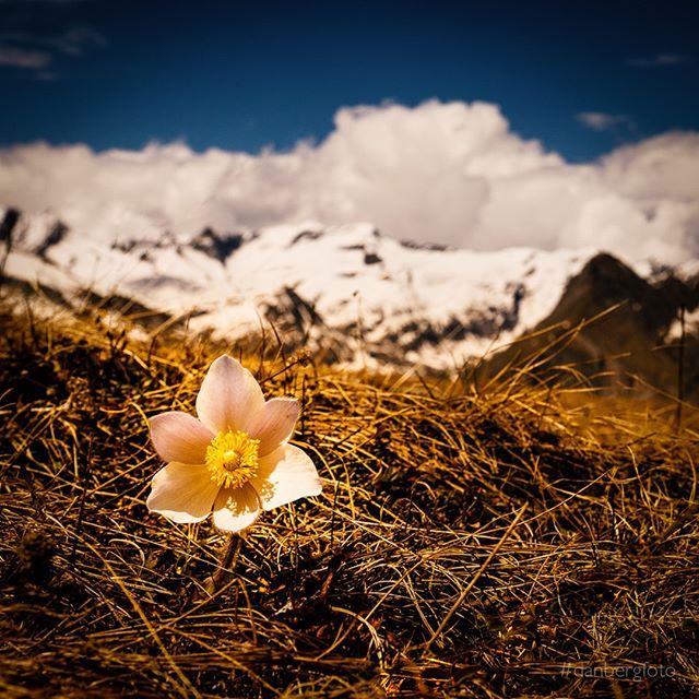 Alpenfrühling. Springtime in the Alps #landscape #austria #virgental #virgen #instagood #photooftheday #igers #danbergfoto #ilovetraveling